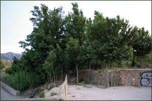 Proyecto El Jarral