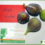 higuera noral